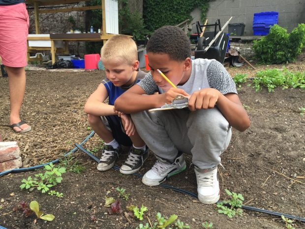 Youth in the garden take notes on the lettuce their observing growing.