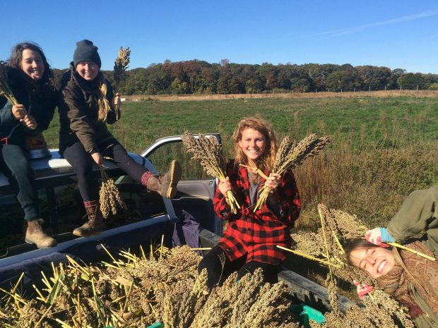 Four smiling women sit in the back of a truck filled with wheat berry stalks.