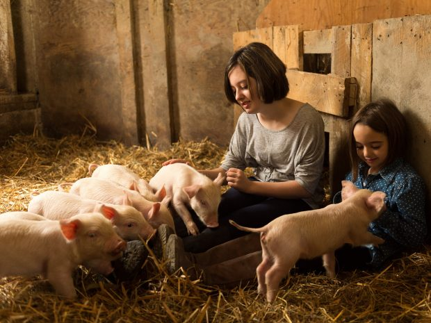 Two farm girls play with piglets in the barn.