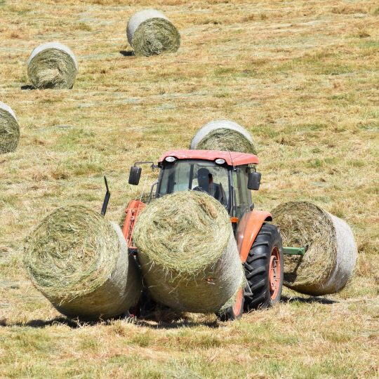 A tractor carries two large round hay bales across the field.