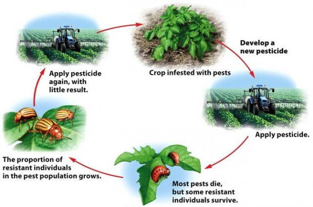 Graphic showing the cycle of how applying pesticides results in only applying even more pesticides.