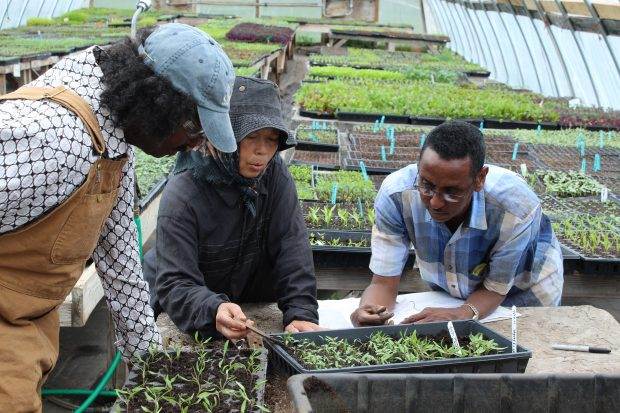 Farmers of different ethnicities tend seedings in a greenhouse.