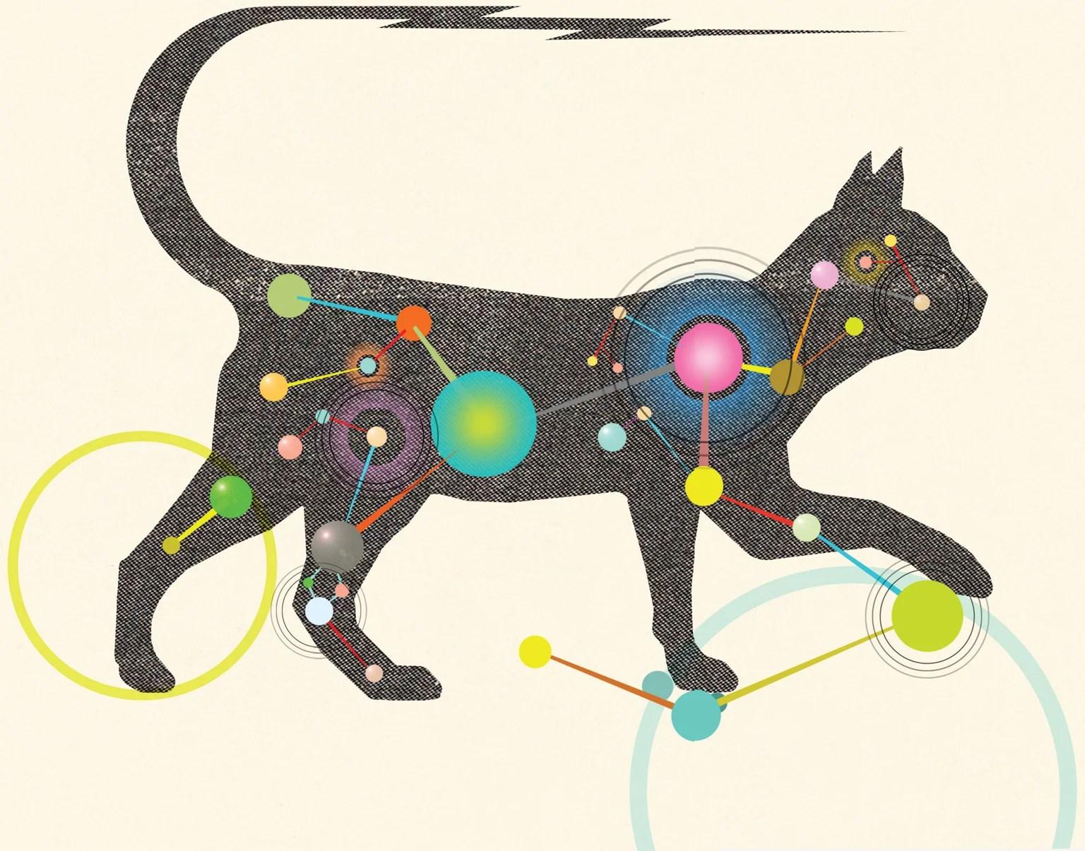 الحياة الداخلية للقطط للعلم