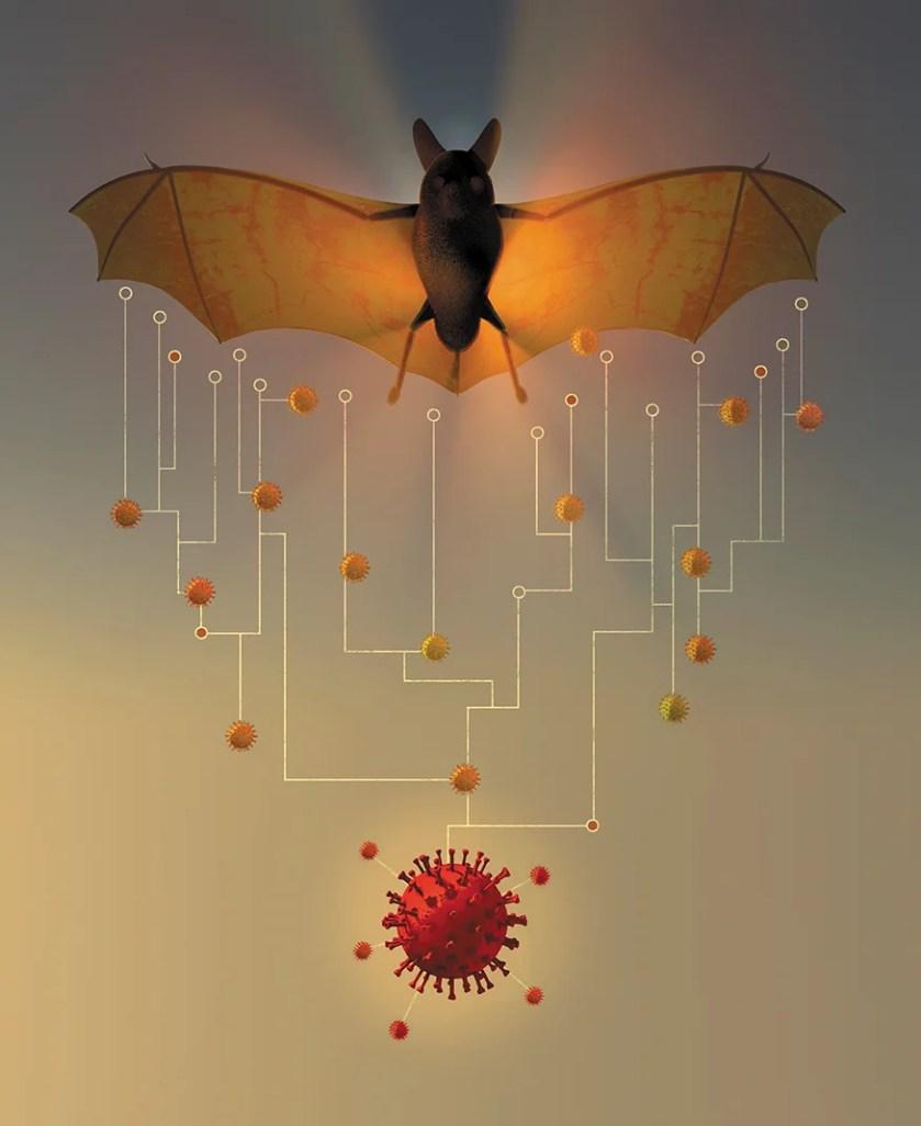 How China's 'Bat Woman' Hunted Down Viruses from SARS to the New  Coronavirus - Scientific American