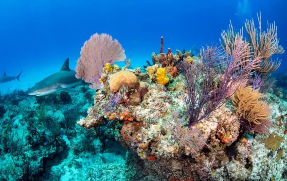 Corals Are Dissolving Away - Scientific American