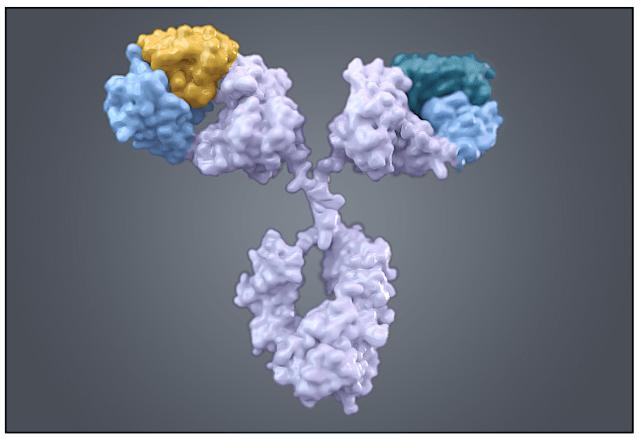 IBI Research On Merus: Elucidating The Prospects Of An Antibody Innovator - Merus N.V. (NASDAQ:MRUS)