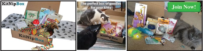Order your monthly box of cat goodies today at www.kitnipbox.com!
