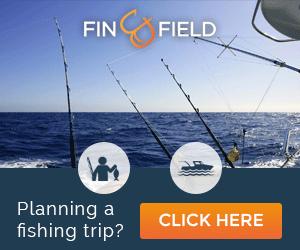 finandfield.com