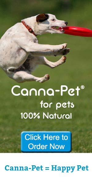 100% Natural Cannabinoids CBD Supplements for Dogs and Cats - Shop Now