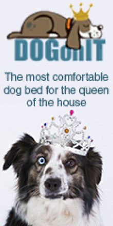 The most comfortable dog beds for the queen of the house
