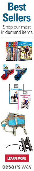 Shop Top Dog Training DVD's,Collars,Leashes and more at Cesar's Way