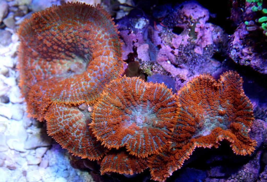 Bullseye Super Orange Aquarium Illusions Inc 17211 107