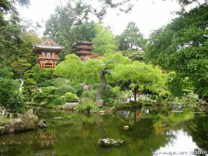 San Francisco : Japanese Tea Garden, Golden Gate Bridge, Alcatraz, Fisherman's Wharf, Pier 39 photo 15