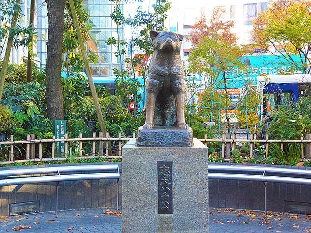 Image result for 渋谷 ハチ公