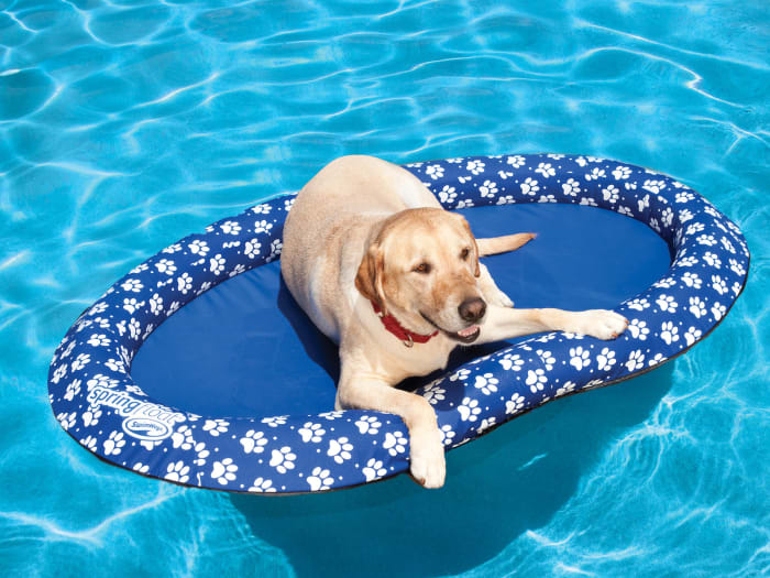But it won't hurt to double up with a doggy life jacket!Price: .69