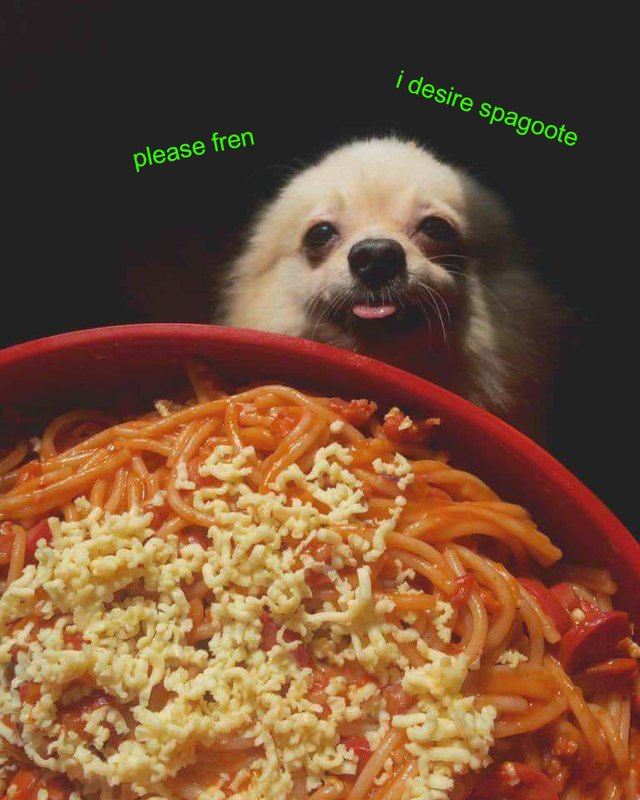 Dog looking at bowl of pasta.