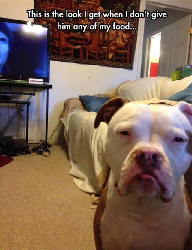 Dog looking grumpy because it didn