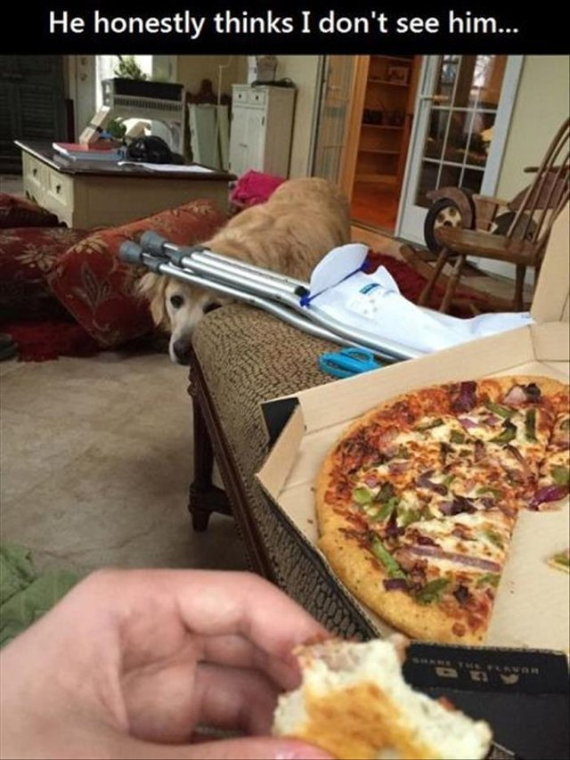 Clearly visible dog trying to hide while watching photographer eat pizza