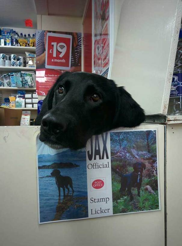 Jax Is The Official Stamp Licker At The Post Office