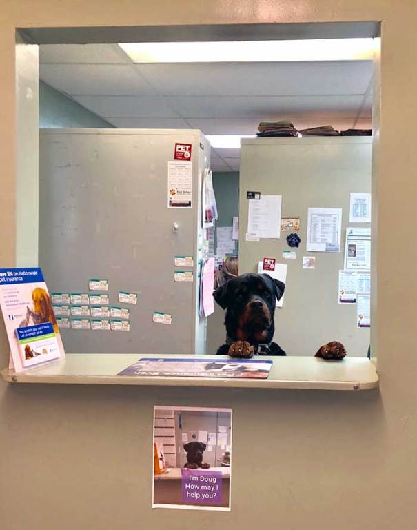 I Took My Dog To The Vet Today And Met This Guy. The Sign Underneath Is The Best Part