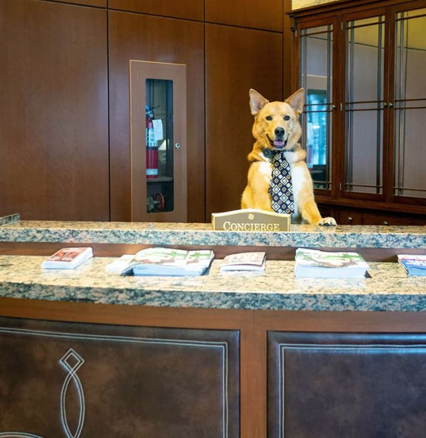 """""""Hello! Welcome To The Hyatt. How Can I Help You Today?"""""""