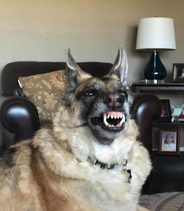 She Looks Like She Is About To Transform Into A Werewolf But She's Actually Just Yawning!