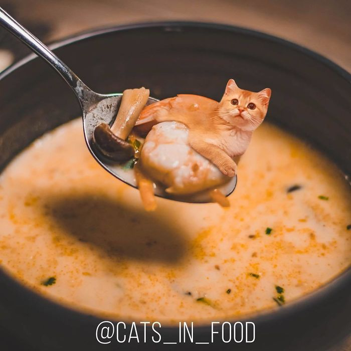 Cats In Food Photoshop