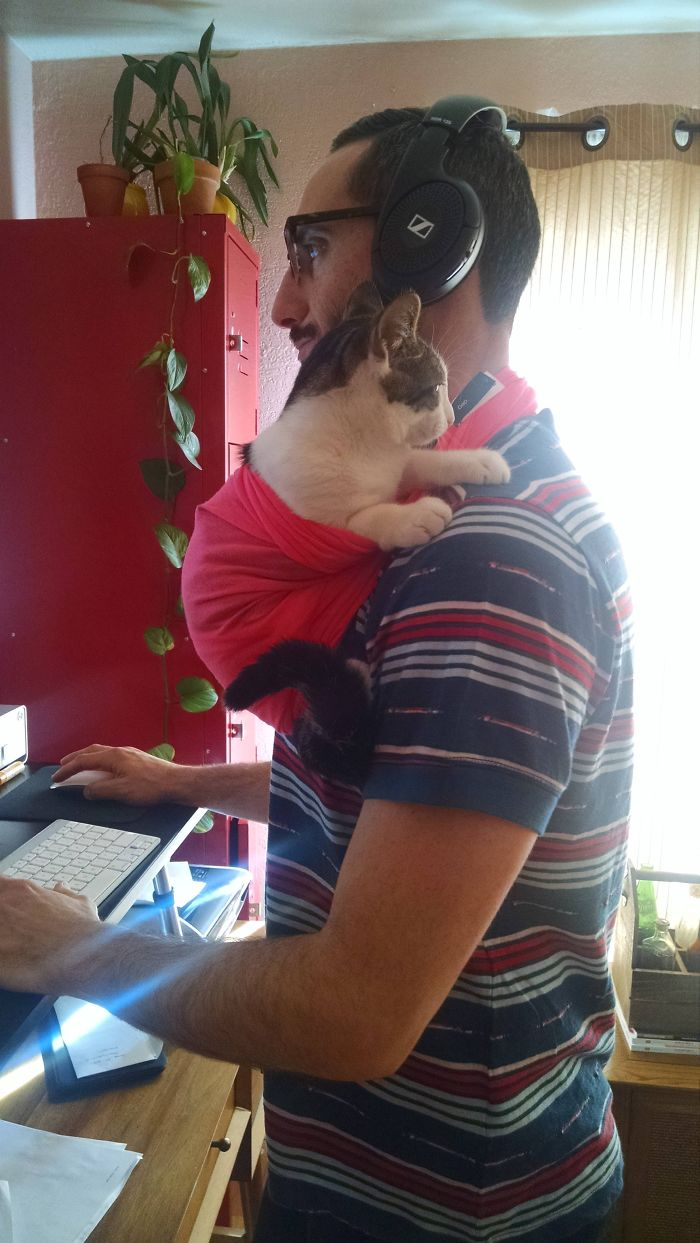 My Boyfriend Cliff Works From Home, But Our Kitten Simon Insists On Being Held Multiple Times Throughout The Day