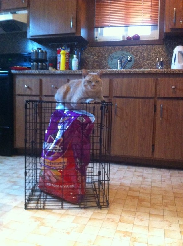 Cat sitting on crate, which contains a bag of the cat