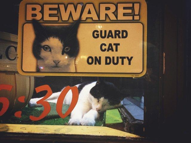 """Cat asleep in a window with a sign that says """"Beware! Guard cat on duty."""""""