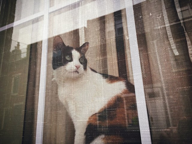Cat look somberly out window.