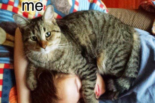 cat on human