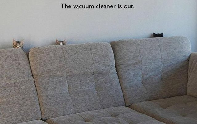 Cats hiding from the vacuum cleaner behind the couch