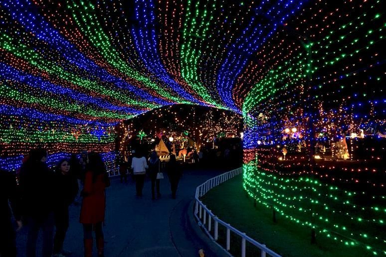 the best christmas light displays in