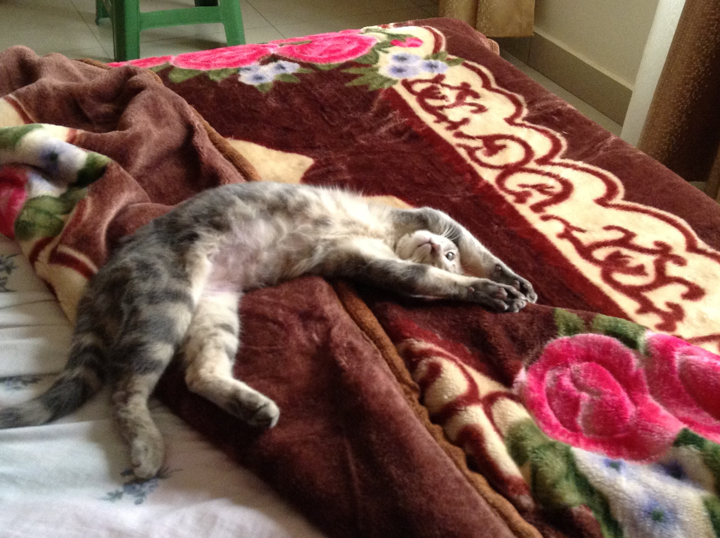 And this is my cat, Sharley. She sleeps in funny positions. Formerly a stray kitten fighting for survival, she now lives in luxury, most likely completely oblivious of the life from whence she came.
