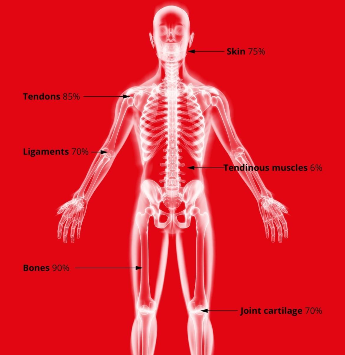 Marine Collagen X-Ray