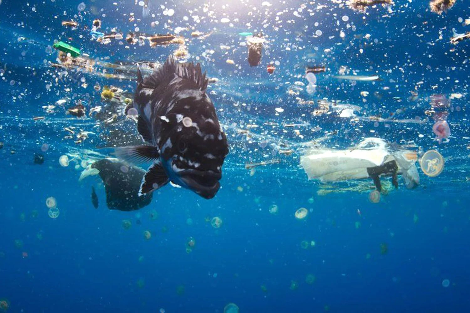 Blue Planet Effect Gives Boost To Sustainable Investment