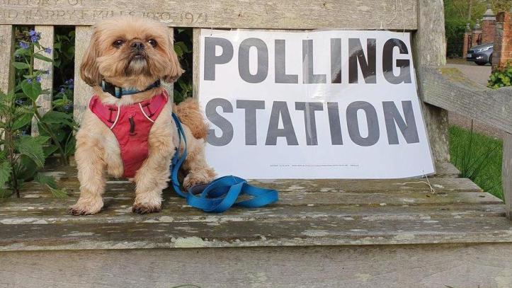 Image result for local elections 2019