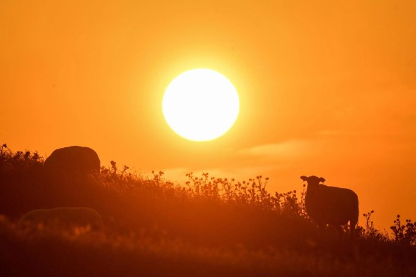 UK heatwave 2019 LIVE: Latest weather forecast on 'hottest ...