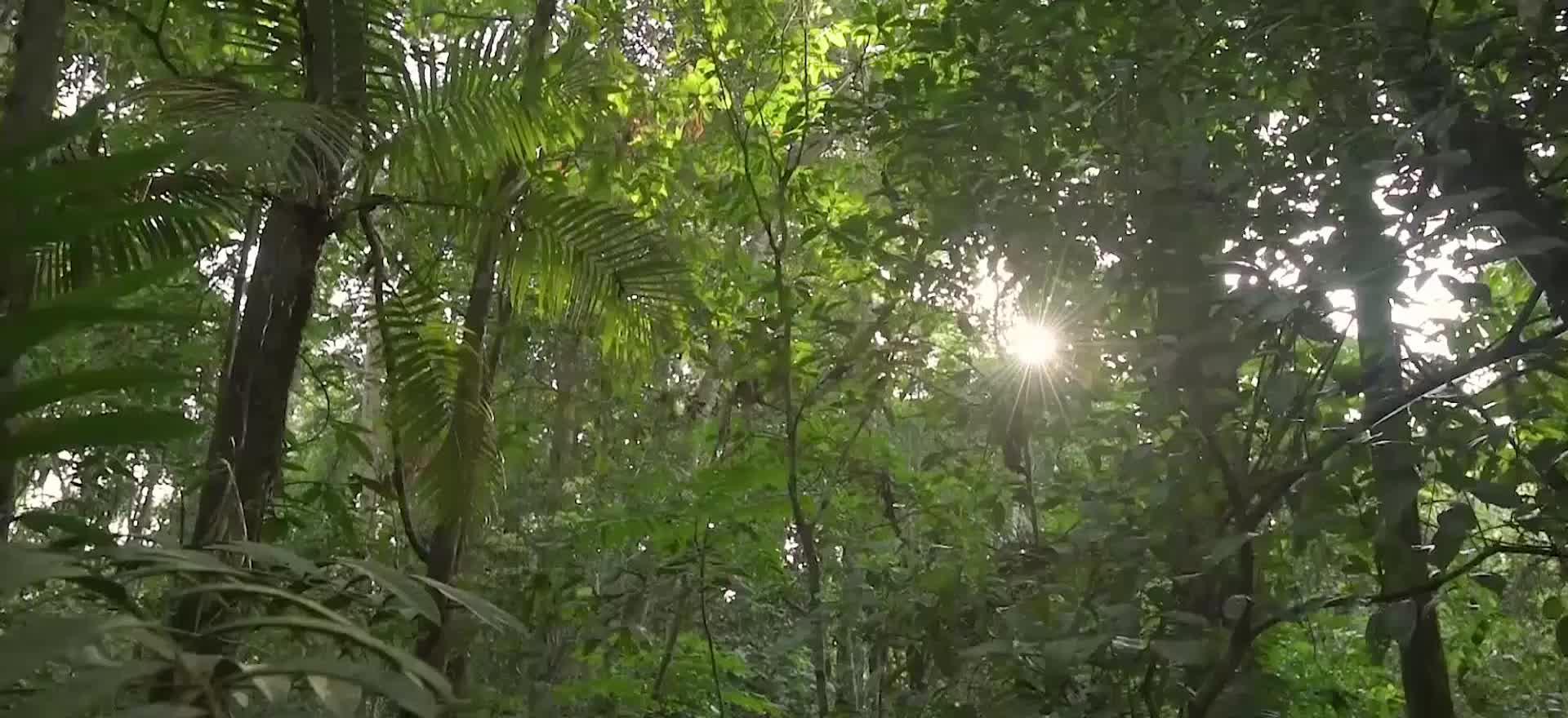 When Will The Amazon Rainforest Be Gone Rainforest