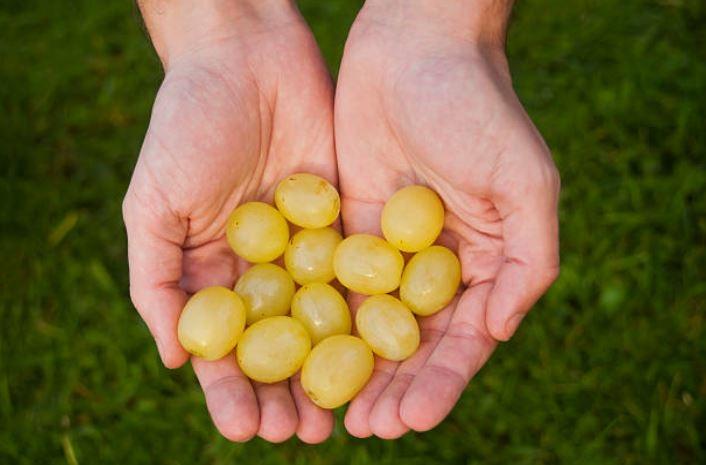 Comer 12 uvas es una popular cábala de Año Nuevo