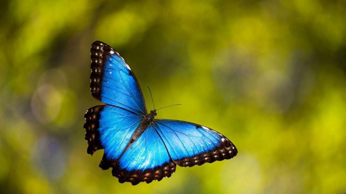 Image result for imagenes de mariposas saliendo de la oruga
