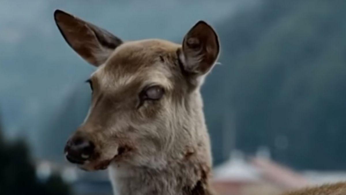 La enfermedad que transforma a los ciervos en zombies