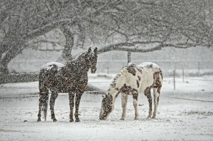 Neige sur Tarbes, samedi, dimanche et lundi