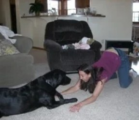 Human bows play to dog to get them to play. Even humans can play bow!