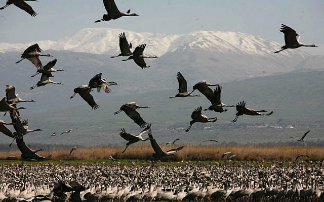 Protecting waterbird habitats to combat the impacts of climate change