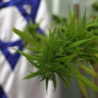 Israeli medical marijuana firms may flee if export ban persists