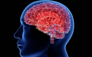 "Israeli scientists say they have opened the way to turn off the ""hunger switch"" of the brain"