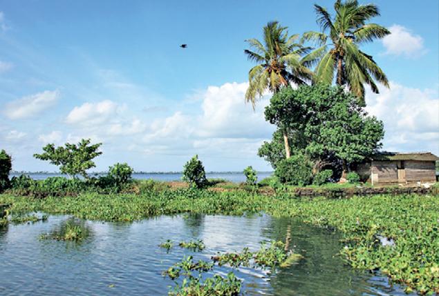 Kerala's Kuttanad below sea level farming system