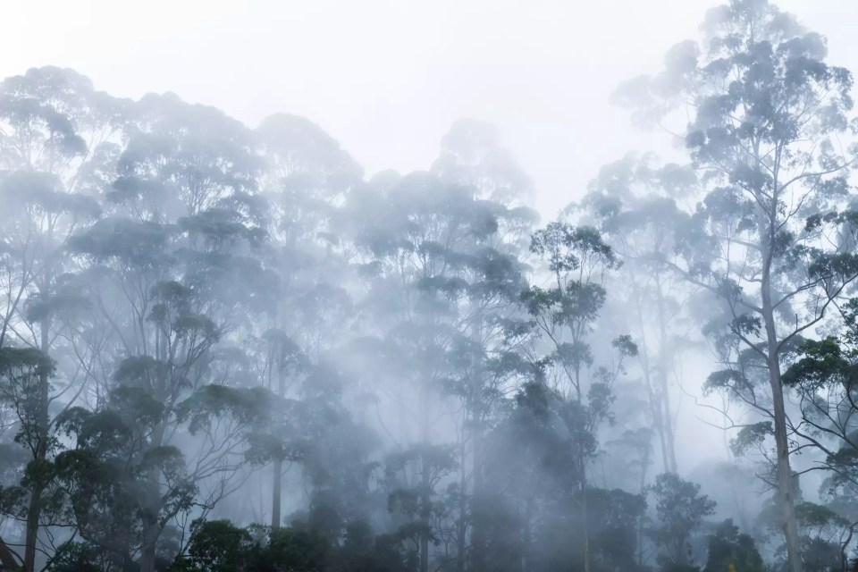 foggy in  kodaikanal during monsoon
